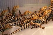 Продаю рептилий и экзотических животных. Омск