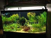 Чистка аквариумов Пенза