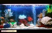 Чистка аквариума Пенза. Обслуживание аквариума Пенза. Аквариумные услуги Пенза.