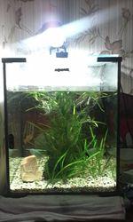 Аквариум с рыбками м. Братиславская